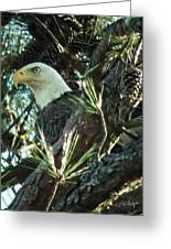 Mama Eagle  Greeting Card