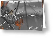 Mama Hummingbird Greeting Card