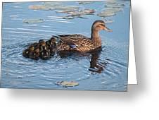 Mama Mallard And Her Ducklings Greeting Card