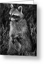 Mama Raccoon Greeting Card
