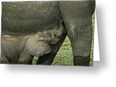 Mama's Milk Bar Greeting Card