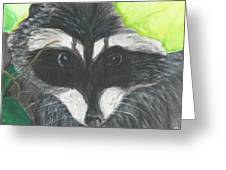 Mamma Raccoon  Greeting Card