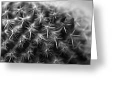 Mammillaria Greeting Card