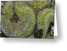 Mammillaria Red Cap Cristata Greeting Card