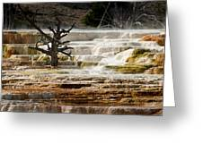 Mammoth Hot Springs Beauty Greeting Card