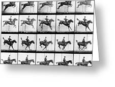 Man And Horse Jumping Greeting Card by Eadweard Muybridge