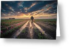 Man Watching Sunrise In Tulip Field Greeting Card