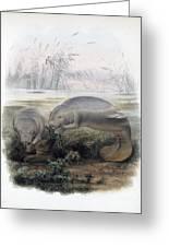 Manatees, Vulnerble Species Greeting Card