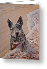 Mancha At The Beach Greeting Card