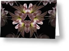 Mandala Amarylis Greeting Card