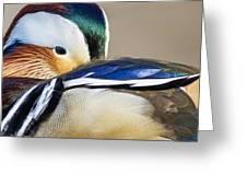 Mandarin Closeup Greeting Card