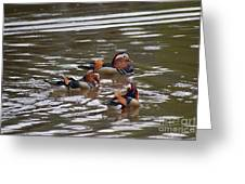 Mandarin Duck 20130507_93 Greeting Card