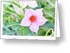 Mandevilla Pink Beauty Greeting Card