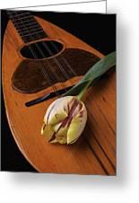Mandolin And Tulip Greeting Card