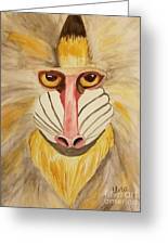 Mandrill Monkey Greeting Card