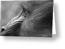 Mandrill Posing For The Portrait Greeting Card
