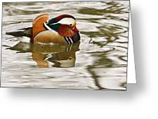 Mandrin Duck Going For A Swim Greeting Card