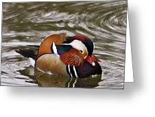 Mandrin Duck Posing Greeting Card