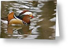 Mandrin Duck With A Purpose Greeting Card