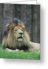 Mane Standing Up Around The Head Of A Lion Greeting Card