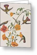 Mango Humming Bird Greeting Card