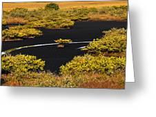 Mangrove River Panoramic Greeting Card