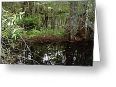 Mangrove     Wild Greeting Card
