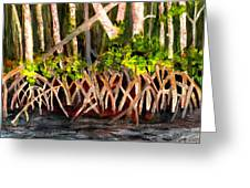 Mangrove At Gumbo Limbo Greeting Card