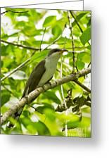 Mangrove Cuckoo Greeting Card