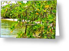 Mangrove Pods Greeting Card