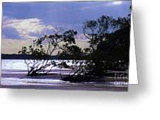 Mangrove Silhouettes Greeting Card