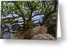 Mangroves And Coquina Greeting Card