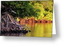 Mangroves Of Roatan Greeting Card