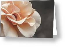 Manito Park Rose Greeting Card