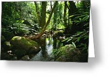 Manoa Valley Stream Greeting Card