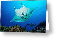 Manta Reef Greeting Card