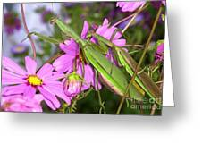 Mantis Mates In The Cosmos Greeting Card