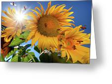 Many Bees Flying Around Sunflowers Greeting Card