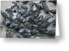 Many Doves At Piazza San Marco Venice Greeting Card