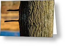 The Many Lines Of Nature Greeting Card