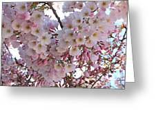 Many Pink Blossoms Greeting Card