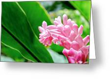 Many Pink Petals Greeting Card