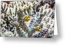 Many Stems Of Poky Small Cactus In Desert Greeting Card