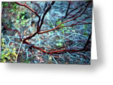 Manzanita Abstract Greeting Card