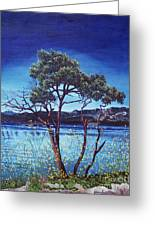 Manzanita At Lake Hemet Greeting Card