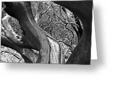 Manzanita Black And White Greeting Card