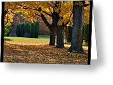 Maple And Arborvitae Greeting Card