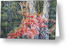 Maple And Birch -new England  Fall Greeting Card
