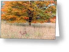 Maple And Tall Grass Greeting Card