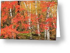 Maple Birch Forest In Autumn Greeting Card